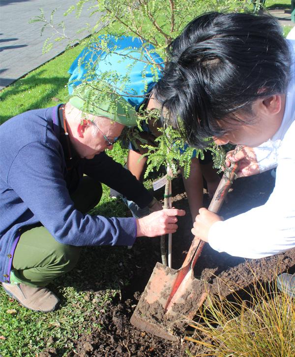 planting c